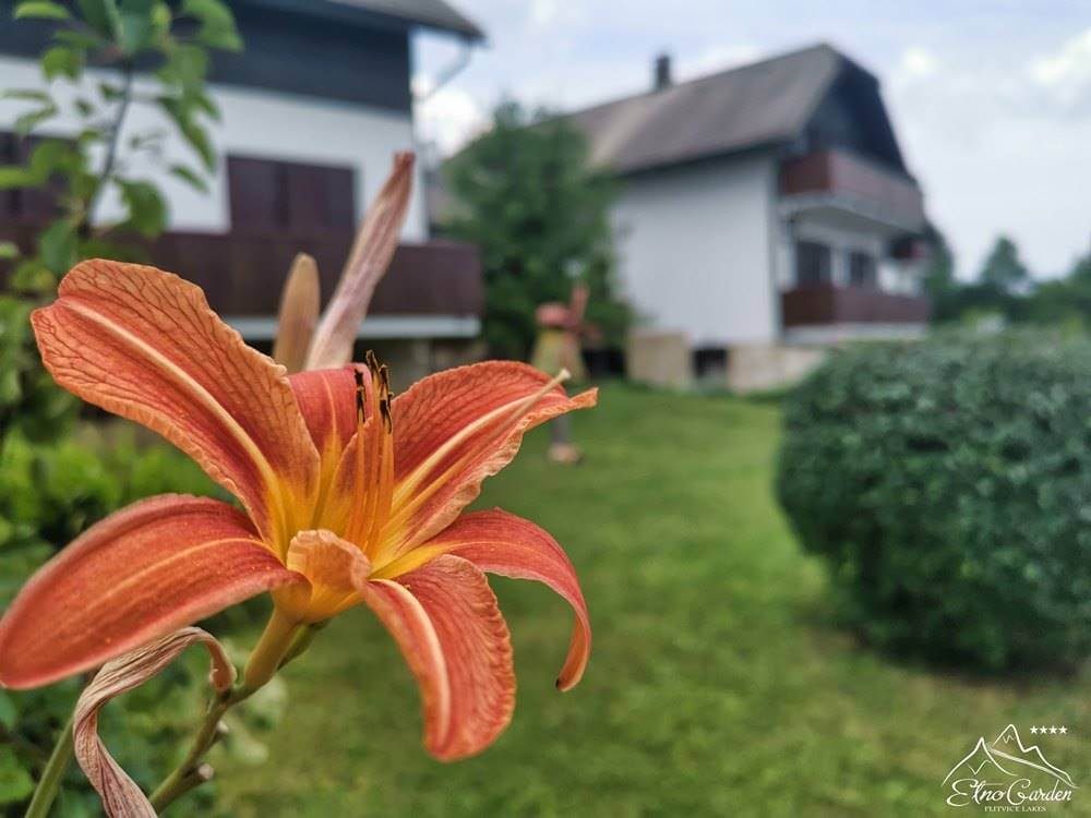 Ljeto na Plitvičkim jezerima Cvijet