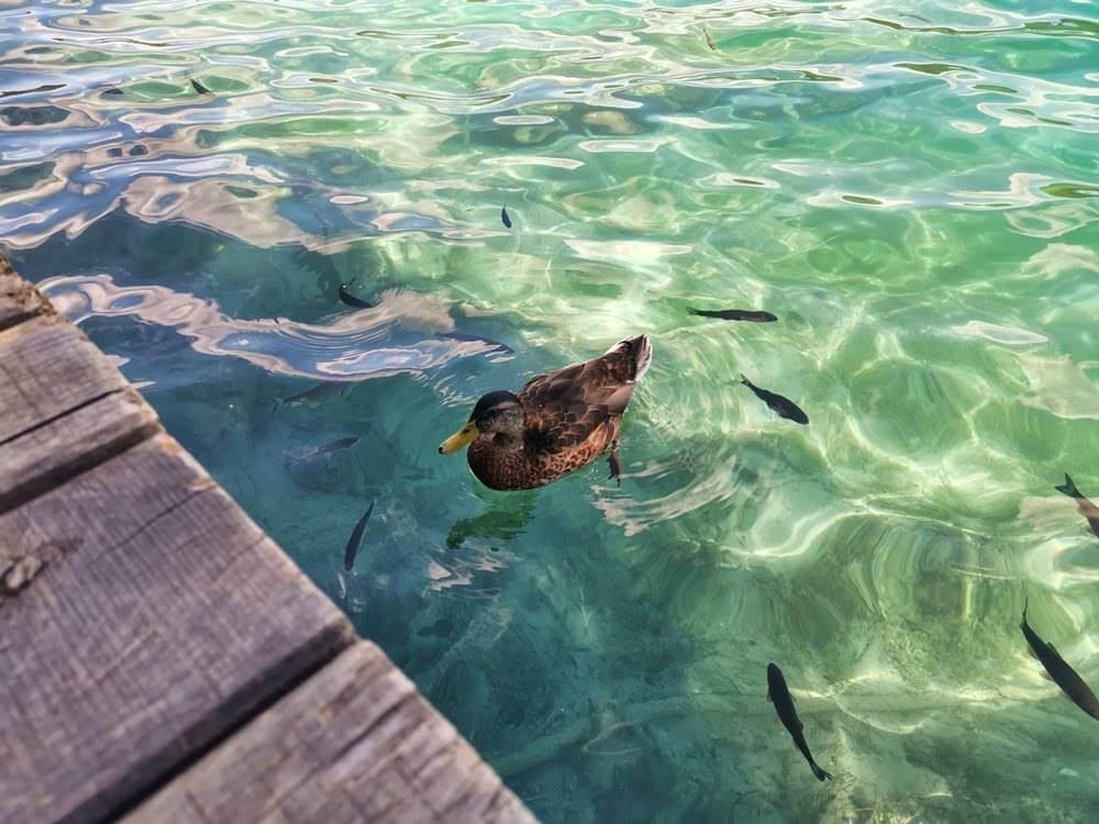 Plitvička Jezera ultimativni vodič 2021 - (10)